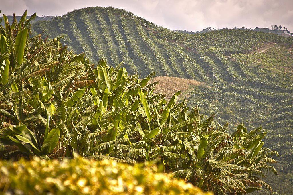 Кофе Колумбия Супремо выращивают а северных склонах Восточных Кордильер