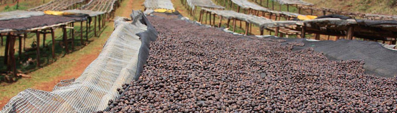 Способы обработки кофейных зерен